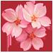 Albero sakura missioni e aiuti fattoria felice for Sakura albero